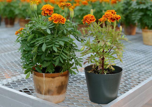 self-fertilizing bioplastic container