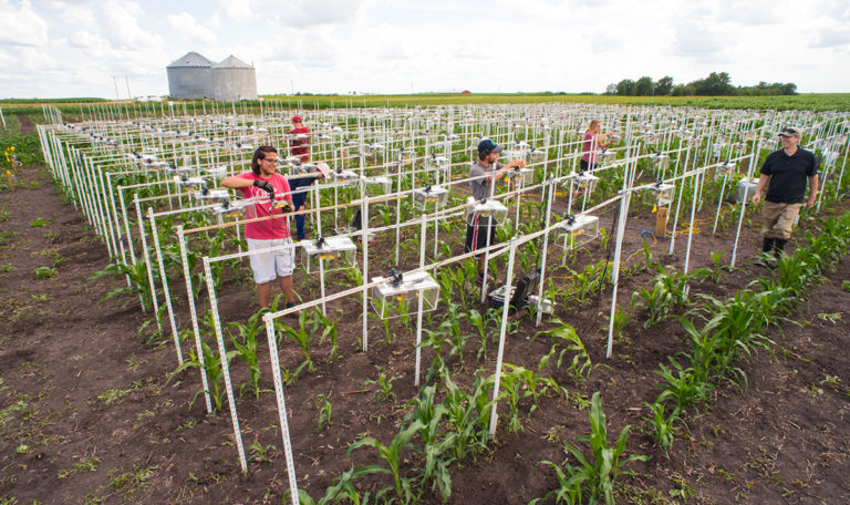Undergraduates set up hundreds of digital cameras to record time-lapse data of plant growth. Patrick Schnable, on the right, directs the experiment in precision and digital agriculture. Image courtesy of the Iowa Economic Development Authority.