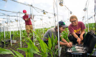 $20 million federal grant launches AI Institute for Resilient Agriculture